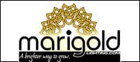marigold-c