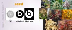 slide8-seed